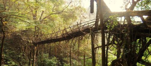 Rangthylliang, a maior ponte viva de raízes do mundo - foto por Anselmrogers