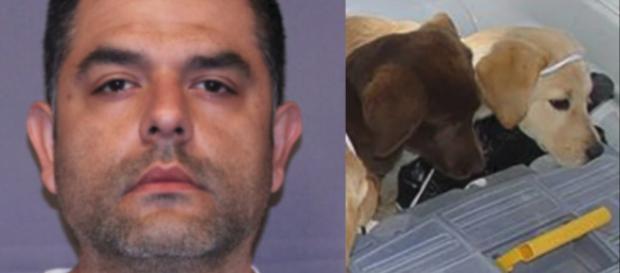 Stati Uniti, condannato veterinario: usava cuccioli per esportare droga