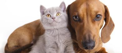Proposto inserimento nello stato di famiglia di cani e gatti domestici, DDl in commissione