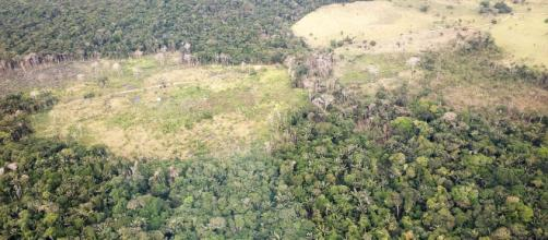 Bolsonaro vende quince millones de hectáreas del Amazonas