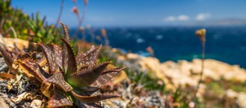Las Islas Baleares se adelantan a la Unión Europea