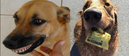 Os cães enchem um lar de carinho e com presentes inusitados. (Foto/Reprodução via Awebic).