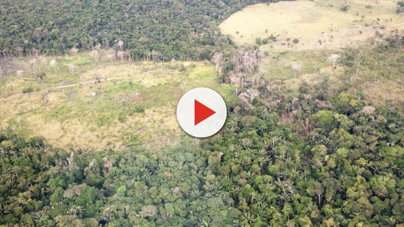 El Gobierno de Bolsonaro vende 15 millones de hectáreas del Amazonas