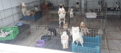 Canil com mais de 1,5 mil animais é fechado em Piedade (SP) após denuncia de maus-tratos