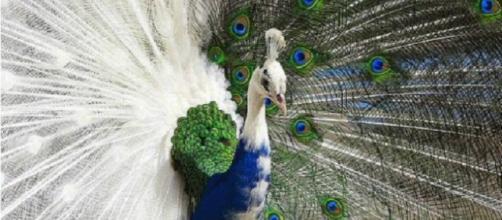 Animais lindos, diferentes e com uma genética incrível. (Reprodução).