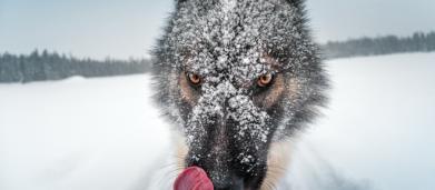 5 raças de cães que muitas pessoas não conhecem