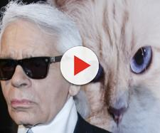 Karl Lagerfeld Says His Cat Choupette Made $3 Million Last Year | Time - time.com