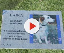 Lombardia: cani e gatti potranno essere sepolti con i loro padroni