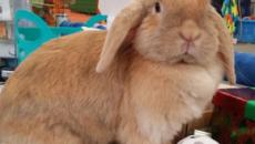 Long Island Pet Expo: Interview with organizers Dennis and Karen Garetano