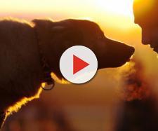 Cani e padroni insieme anche dopo la morte - newnotizie.it