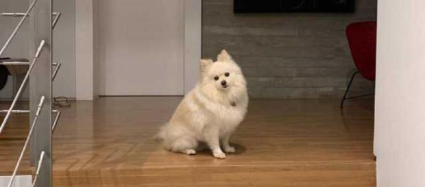 A cadelinha Nina tem apenas três anos de idade. (Foto: Instagram)
