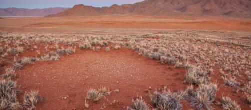 I Cerchi delle Fate della Namibia non sono più un mistero. Quando ... - cafeafrica.it