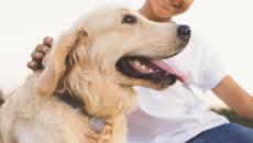 Jiobit for Pets: Interview with entrepreneur John Renaldi
