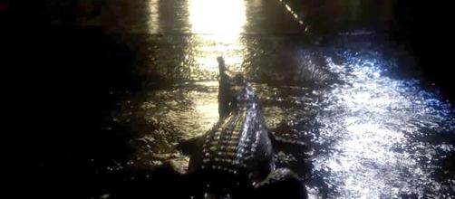 Moradora de Townsville fotografou um crocodilo em uma inundação na Austrália. (Foto/Reprodução)