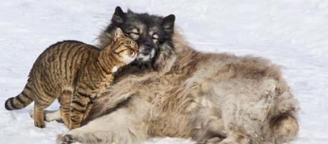 Animals get on with each other, why can't we? [Image Pixabay]