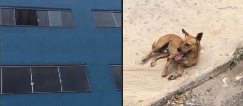 Cachorro arremessado de prédio no DF (Reprodução Metrópole/Youtube)