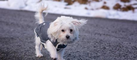 La nieve y el frío puede enfermar a los perros durante la temporada invernal. - pxhere.com