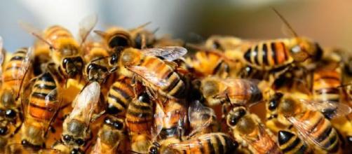Enxame de abelhas (Imagem: Reprodução/Pixabay)