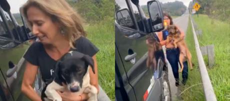 Os cães foram levados para o abrigo de cães. (foto: Reprodução / Instagram)