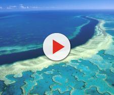 Puglia, non esiste nessuna 'barriera corallina': si tratta solo di biocostruzioni naturali