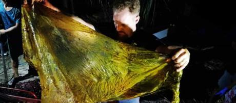 Darrell Blatchley encontrou cerca de 40 quilos no estômago de baleia morta (Arquivo Blasting News)