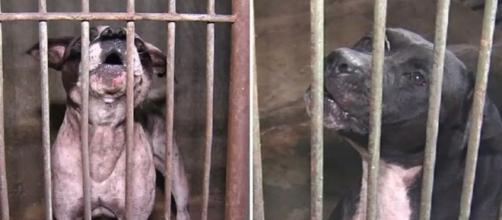Animais foram levados para o Centro de Zoonoses de Goiânia (Foto: Reprodução/TV Anhanguera)