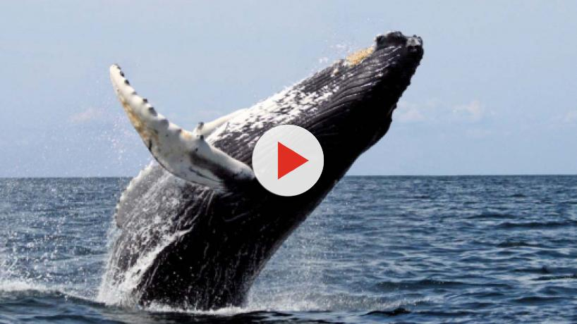 Man ends up in a whale's mouth in South Africa and lives to tell the tale