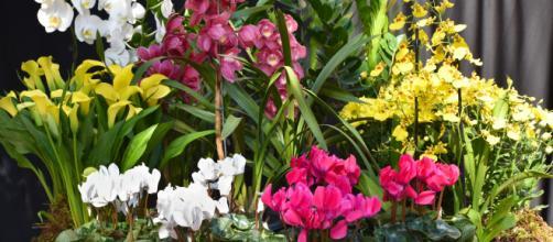 Flores e decoração inspiram pessoas no mundo todo. (Imagem: Reprodução Instagram)