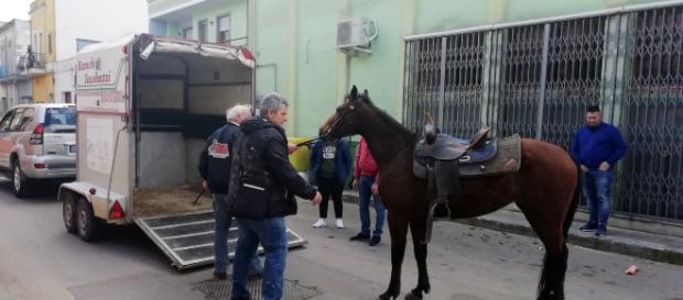 Brindisi, attaccati da un pitbull cavallo e padrone: animale imbizzarrito fugge in paese (fonte foto: Brindisi Report)
