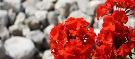 6 plantas ideais para o outono - Foto: acervo Blasting News