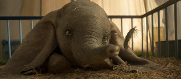 Dumbo in versione live action al cinema