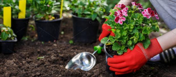 O contato com a terra e o germinar é terapêutico. (Arquivo Blasting News)
