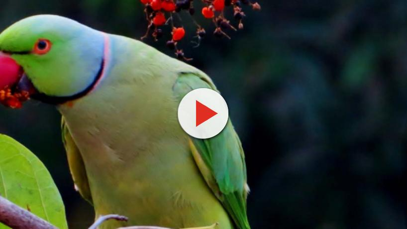 5 viral videos of birds and cats interacting