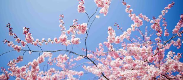L'equinozio di primavera è già arrivato