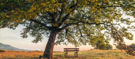Panchina solitaria (Sprea fotografia)