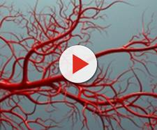 Obesità, diabete e altre malattie metaboliche riducono la reattività vascolare, anticamera di problemi cardiovascolari anche molto gravi.