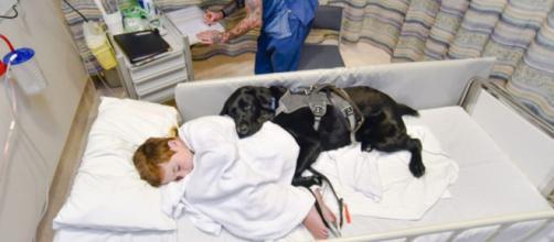 Aprovada lei que permite animais em hospitais. (Arquivo Blasting News)