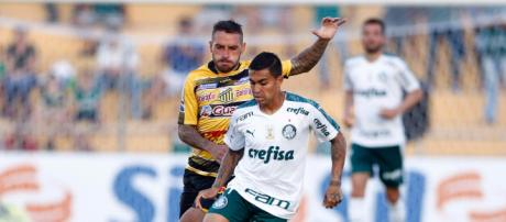 Novorizontino x Palmeiras, um dos confrontos das quartas de final. (Foto: Arquivo/ Blasting News)