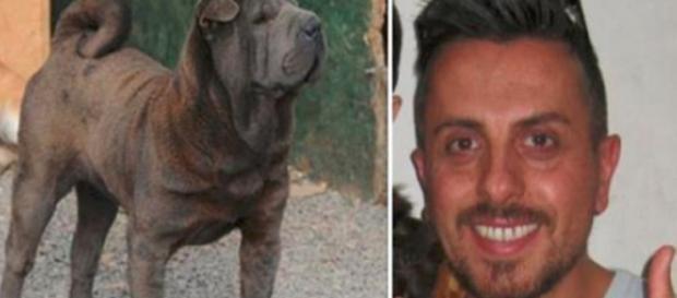 Sbranato a morte dal suo stesso cane, l'amico più fedele: trovato dalla moglie in una pozza di sangue - Il Mattino