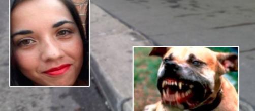 Altro orrore dopo Roma: 33enne sbranata e uccisa dai suoi pitbull mentre porta da mangiare - Teleclubitalia