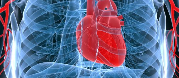 El sistema cardiovascular regula el tránsito sanguíneo. - blogspot.com