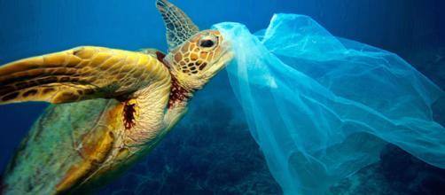 Millones de bolsas de plástico acaban en el mar todos los años y evitarlo es simple, llevar con nosotros nuestra propia bolsa de tela.