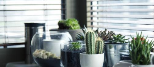 Plantas para cultivar dentro de casa - Arquivo Pixabay [https://pixabay.com/pt/photos/panelas-plantas-cacto-suculento-716579/]