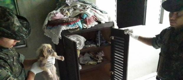 Mulher terá que pagar R$54 mil por maltratar animais. (Foto: Divulgação/ Polícia Militar Ambiental de Cananeia)