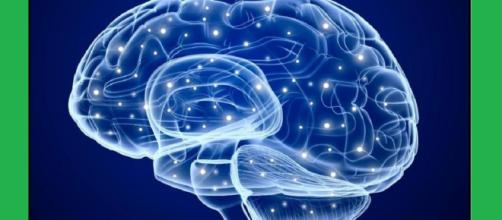 Nel cervello degli anziani c'è una riserva di cellule staminali dormienti che può essere riattivata, per riparare i danni dei neuroni cerebrali.