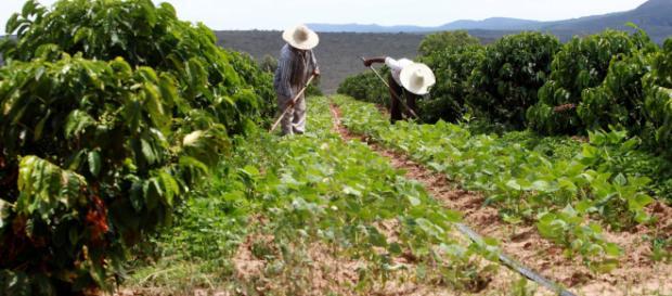 Trabalhador rural terá que contribuir (Foto: Banca de Dados/ Blasting News)
