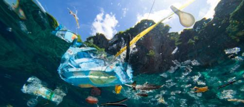 Vivere senza plastica: i rifiuti distruggono gli oceani