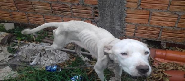 Em situação de maus-tratos uma cadela e seis filhotes são resgatados (Divulgação/Prefeitura de Florianópolis)