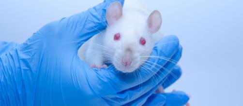 El equipo liderado por el español Barbacid logra eliminar el cáncer de páncreas en ratones