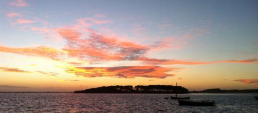 Porto Cesareo, sono troppi i conigli sull'isola Grande: il caso finisce in Procura
